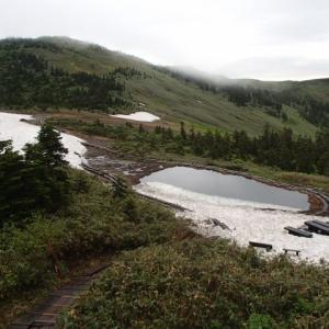 滝沢登山道はマイヅルソウロードに!