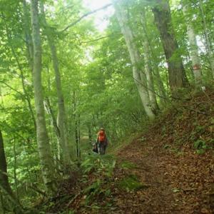 深碧の森へ 「沼田街道と御池古道」