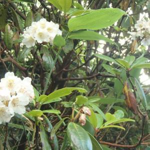 駒の小屋~山頂のお花