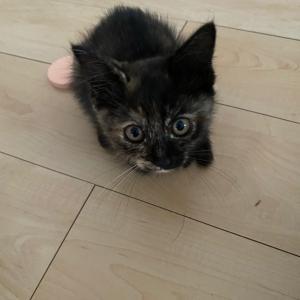 迷い猫保護してます!(個人宅)