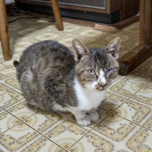 拡散希望・迷い猫保護しています!&猫を探しています!