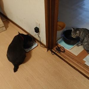 猫達も水分補給