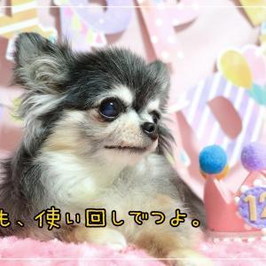 Happy Birthday ~ココ・12歳~