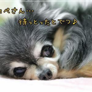 ココさん、お待ちかねの (○,,´艸゚)