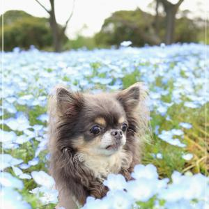春のこと、束の間の休息 (-´∀`-)