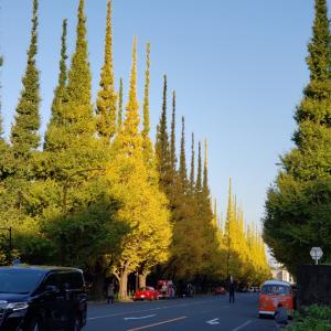神宮外苑のいちょう並木