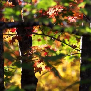 秋色を生けるーⅢ