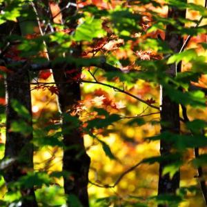 秋色を生けるーⅣ
