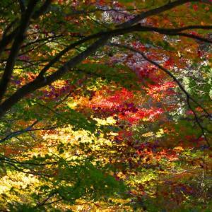 秋色を生けるーⅧ