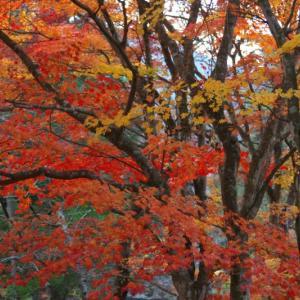 晩秋を撮る