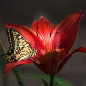 「益蝶」と「害虫」・・・!!