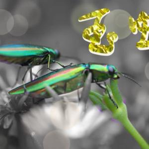 「玉虫」・・・今年の夏は・・・!!