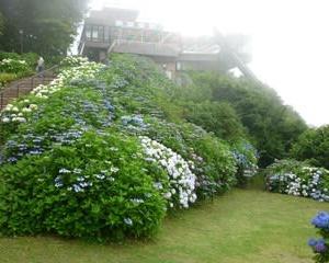 梅雨の合間に弥彦山登山