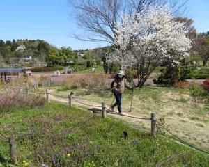 新津ふるさと公園を回ってきました