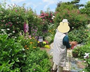 K君ちの薔薇園に行って来ました