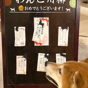 愛犬旅行(3)〜おやすみとおはよう