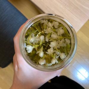 「EMSが届いた!ジャスミン茶に癒される①」の話