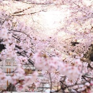 2019年の桜ダイジェスト