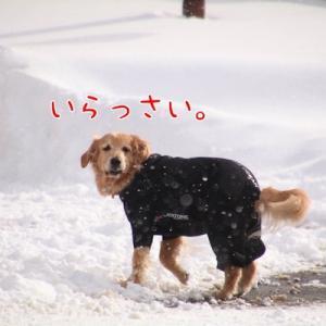 みんな大興奮の雪遊び