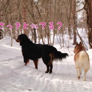 幸せは檜原湖に ~福島雪旅行~