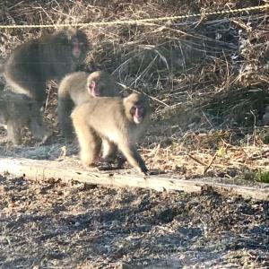 今日もお猿&ご支援物資