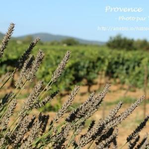 Provence プロヴァンスの風