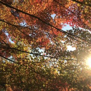 秋のお散歩は・・