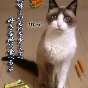 往診 ~獣医さんは凄いな!~