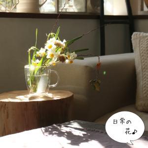 日常の花生け 水仙・イソブキの綿毛・コデマリ