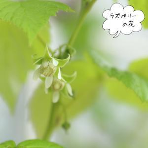 庭のラズベリーの花咲き実がなる