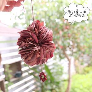 ポポラスの赤い葉っぱを使ってリース