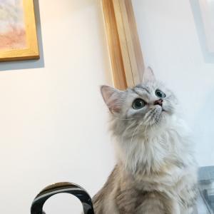 レムちゃんは美人さん^_^