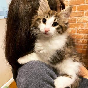 抱っこしたい!