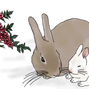 ウサギと禰豆子と赤い実の考察