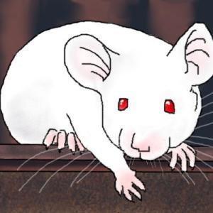 善逸と宇髄さんは永遠のライバル? ネズミから見える善逸の姿