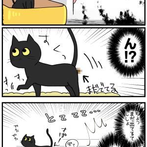 子猫ちゃん、うんこぽろり犯