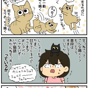 子猫ちゃん、しゃべる