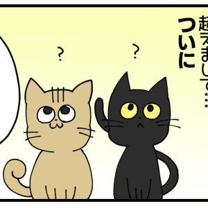 子猫ちゃん、避妊手術する