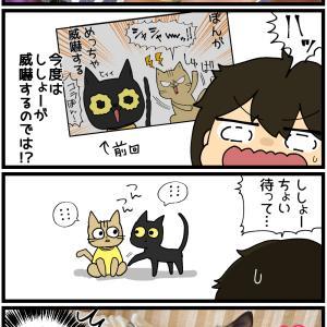 子猫ちゃん、避妊手術する【ぽんちゃん編】