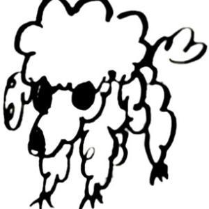 保護犬譲渡会 来週に延期