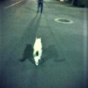 *『簡単ランチ最高』と『夜の散歩。』