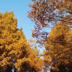 秋のお散歩。