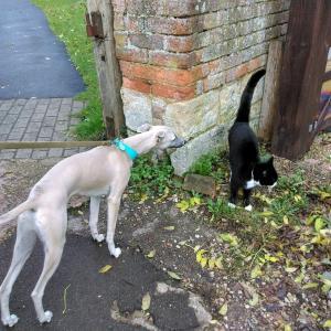 トトジョージとハリネズミ、馬、猫