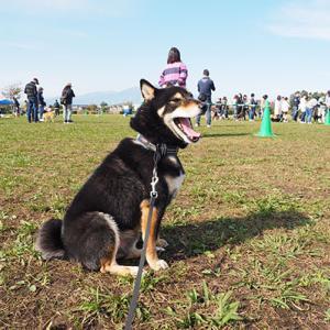 犬舎の運動会を見学