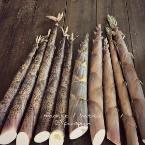 破竹と真竹