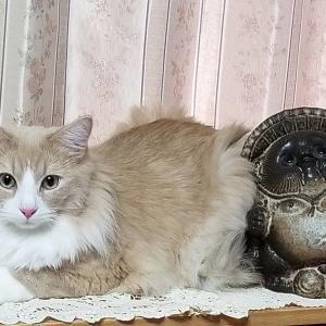 娘の飼ってる猫