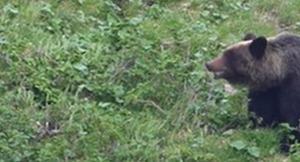 支笏湖周辺のヒグマ出没に注意。ゴミ捨てはやめよう
