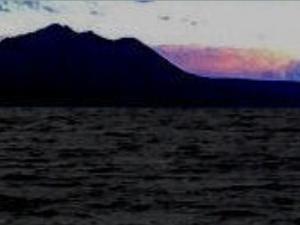 あんだーリペア      支笏湖のブラウントラウト