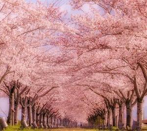 日本に生まれ良かったと思う季節