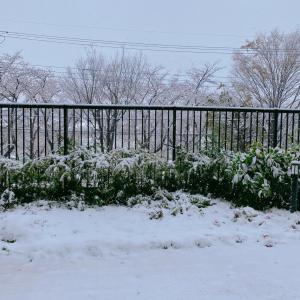 季節外れの雪とおこもりグッズ